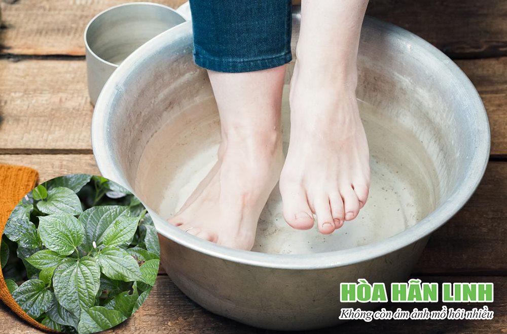 Hướng dẫn cách chữa bệnh ra mồ hôi tay chân bằng lá lốt tại nhà